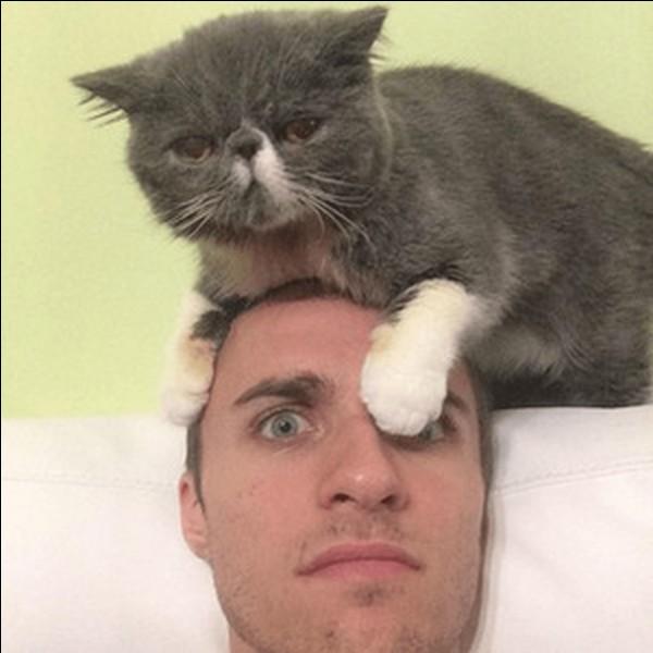 Combien a-t-il de chats ?