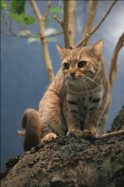 """Si tu étais un chat de """"La Guerre des clans"""", ton activité préférée serait..."""