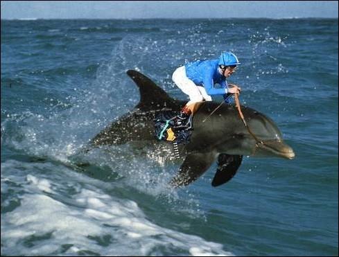 """D - Un vélideltiste pratique le vol libre sur un """"dauphin""""."""