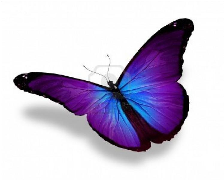 Quel est le nom du bébé du papillon ?