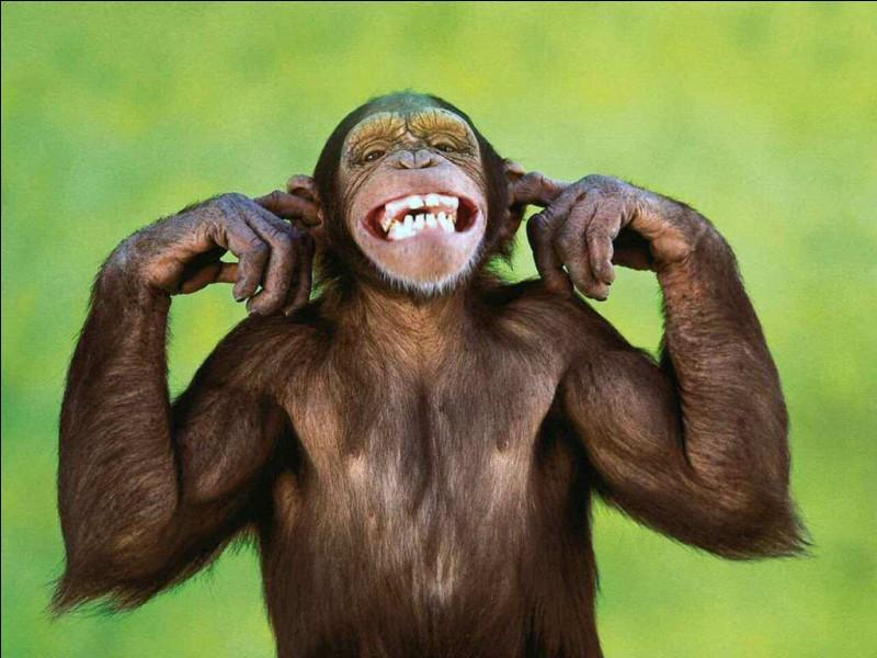 Quel est le nom du bébé du singe ?