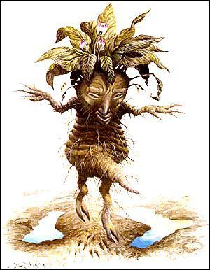 Comment se nomme la plante parasite appelée plus communément ''herbe des sorcières'' ?