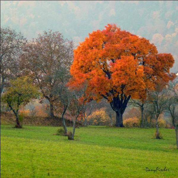 Ce bel arbre donne un fruit qui doit aussi ce manger blet, en forme de petite poire ou pomme appelé sorbe dans le midi. Quel est ce fruit utilisé couramment autrefois?