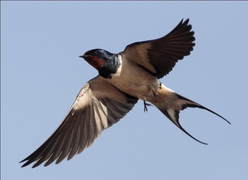 Je suis les plumes de cet oiseau qui sont tombées dans la rivière.