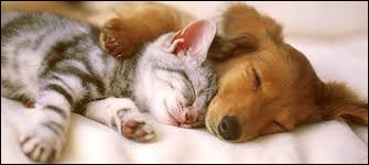 Combien de pattes deux chiens et trois chats ont-ils ?
