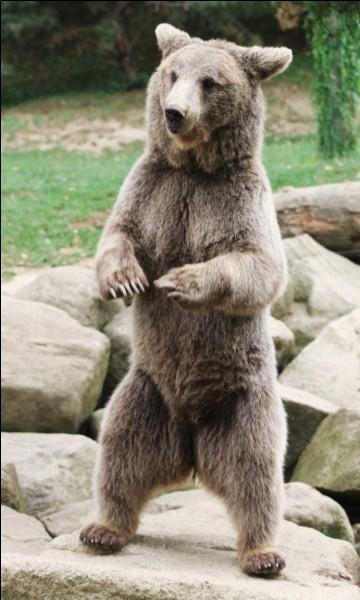 Traversons l'Atlantique pour aller maintenant en Amérique du Nord. Aux États-Unis, en Alaska pour être plus précise, nous avons le droit de tuer un ours. Par contre, nous n'avons pas le droit de :
