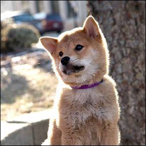 Quel chien donne son nom au film éponyme ?
