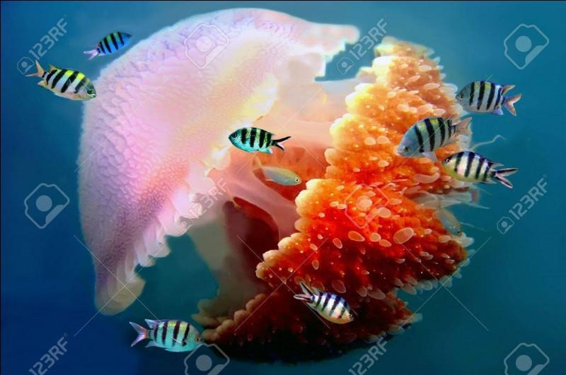 Terminez cette citation, frappée au coin du bon sens : Le fait que la méduse ait survécu plus de 650 millions d'années, alors qu'elle n'a pas de cerveau ...