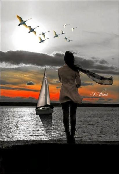 Quel oiseau de mer a fait l'objet d'un poème de Baudelaire ?