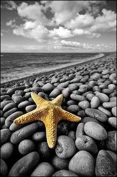 """Quel est le nom de l'étoile de mer qui vit dans """"Le monde de Nemo"""" ?"""