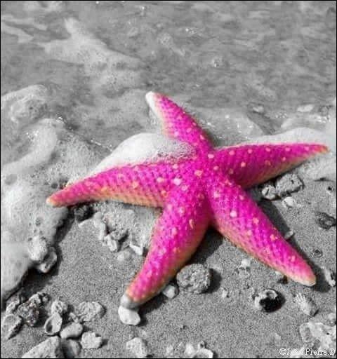 Comment se déplace une étoile de mer ?