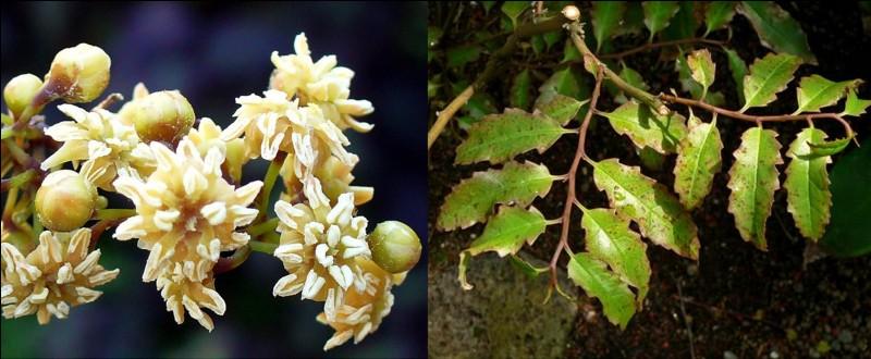 Allons en Nouvelle-Calédonie pour observer une plante bien particulière, « l'Amborella trichopoda ». C'est la plus ancienne plante à fleurs encore existante et l'ancêtre de toutes les plantes à fleurs de la planète.Qu'en pensez-vous ?