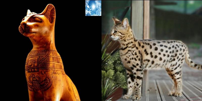 On considère que le chat « mau d'Egypte » serait la plus ancienne race de chat domestique existante. « Mau » signifie « chat » et « nuit » dans l'ancienne langue de l'Egypte pharaonique.Est-ce vrai… ou faux ?