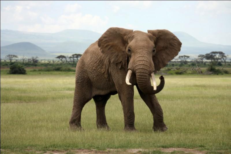 Ce joli éléphant, sais-tu d'où il vient ?