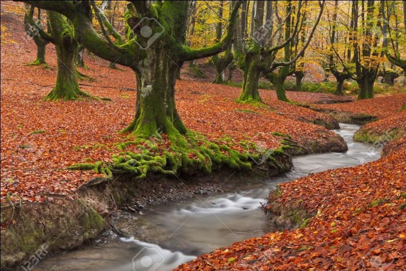 Êtes-vous souvent attiré par l'extérieur ? La nature et vous, vous décollez de votre canapé pour atterrir dans l'herbe fraîche du bois, la forêt et les champignons !