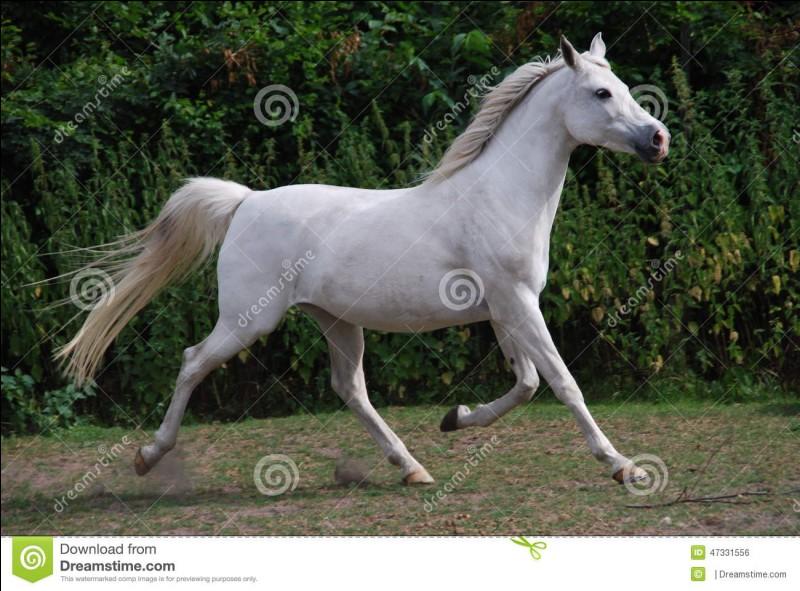 Combien d'allures a le cheval ?