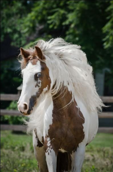 Qu'est-ce qui est le plus dur quand on apprend à monter à cheval ?