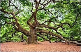 Tu as le choix entre une branche d'arbre et un tronc d'arbre, que choisis-tu ?