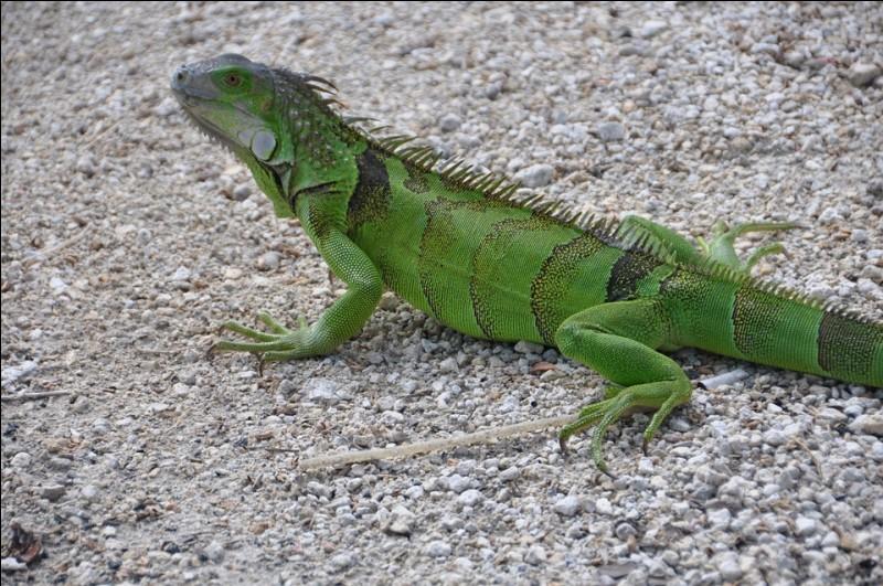 Quel animal vient à La Réunion entre juin et septembre ?