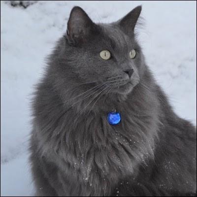 Comment s'appelle le chat chez qui Gerboise s'est caché pendant un moment du Clan du Sang ?