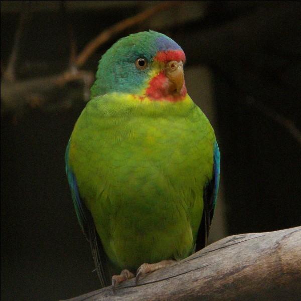 Ce magnifique oiseau a une population critique dans l'...