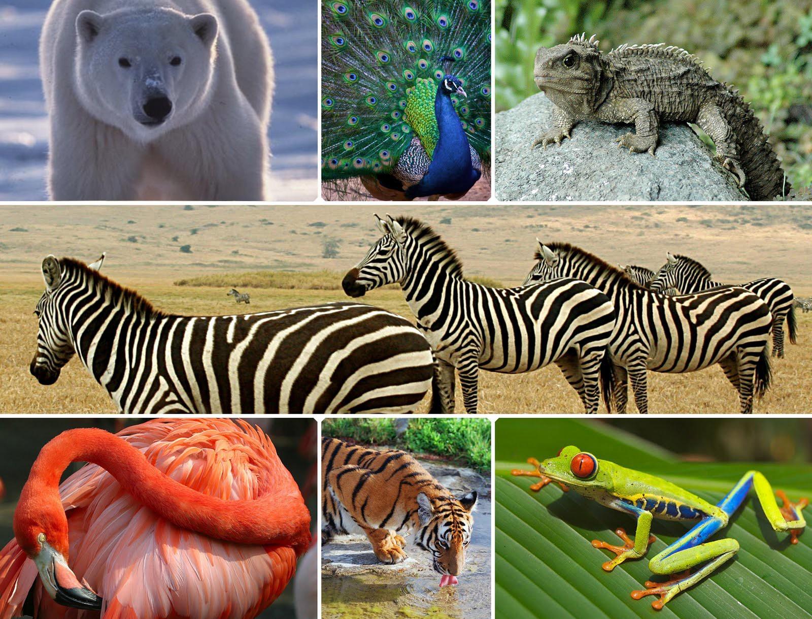 Unité et diversité des êtres vivants
