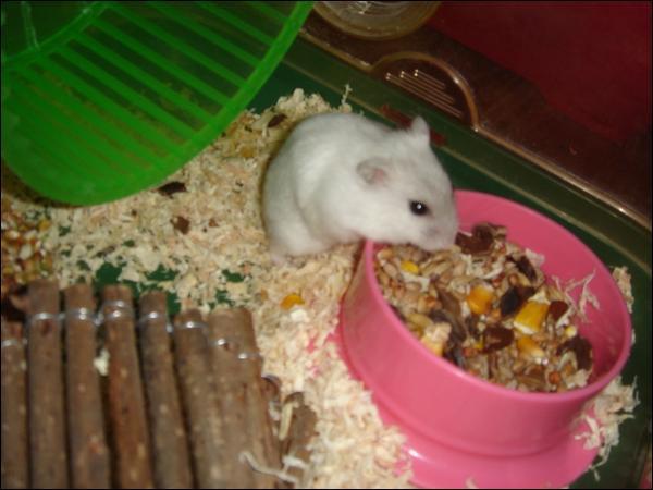Est-ce qu'un hamster peut manger n'importe quoi ?