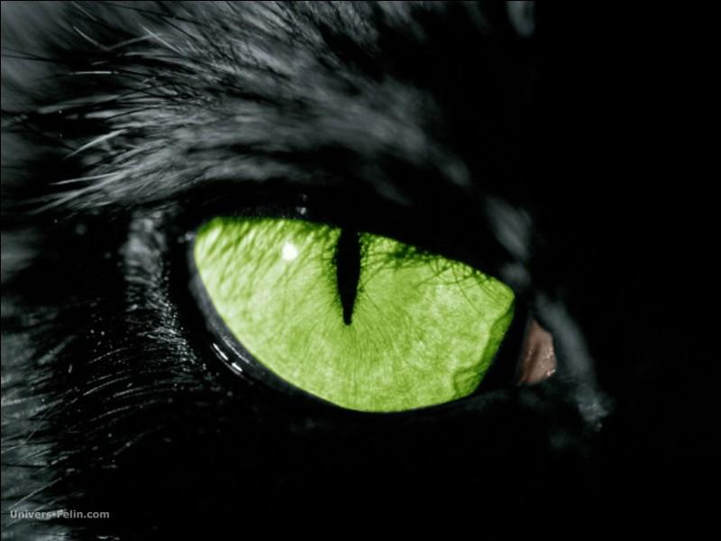 Combien de paupières possède l'œil d'un chat ?