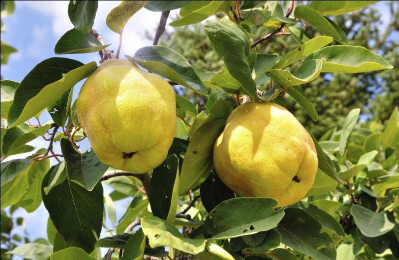 Quel est ce fruit d'automne ?