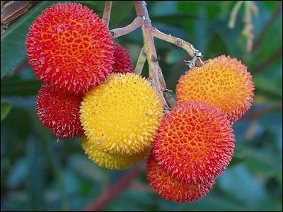 Que sont ces fruits délicieux ?