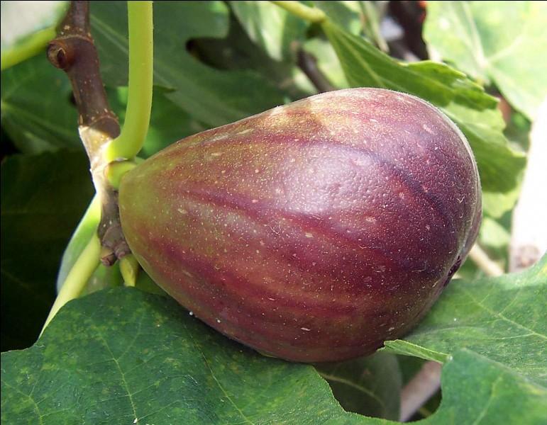 Quel est ce fruit qui pousse sous un climat doux ?