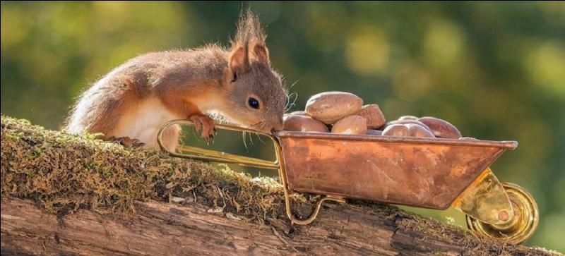 Info ou intox ? ~~~~~~~~~~~ Les écureuils peuvent stocker jusqu'à 10 000 fruits à coque par an en prévision de l'hiver...