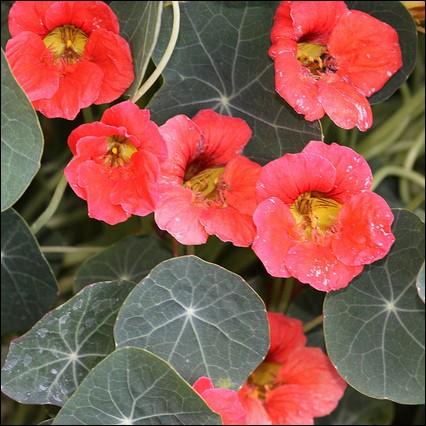 Que sont ces jolies fleurs pleines de gaité ?