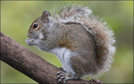 Quel animal porte le même nom que celui-ci ?