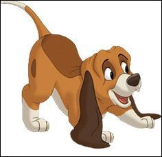 Qui est cet adorable chien ?