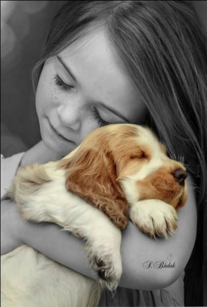 Dans une expression française, au regard de quel animal est comparé un regard doux, triste et attendrissant ? (photo uniquement décorative de Sabri Budak)