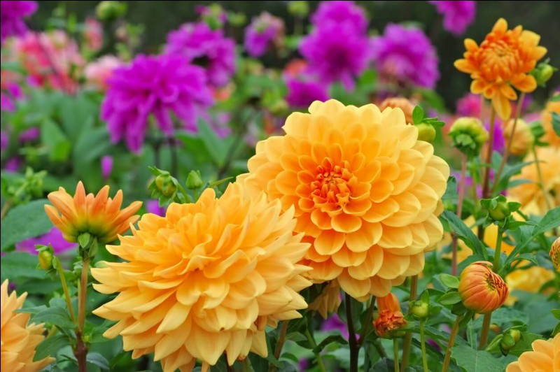 Quelle fleur préférez-vous ?