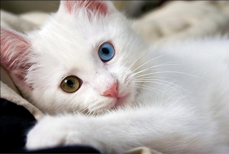 Comment s'appelle le gros chat blanc ?