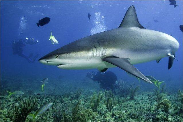 Les espèces de requins