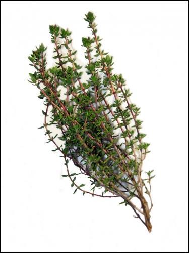 Quelle est cette plante, appréciée pour ses bienfaits sur les voies respiratoires ?