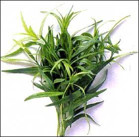 Cette herbe a également donné son nom à un personnage de Beckett. Quelle est-elle ?