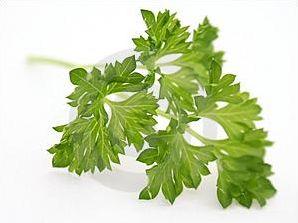 Les plantes et herbes aromatiques