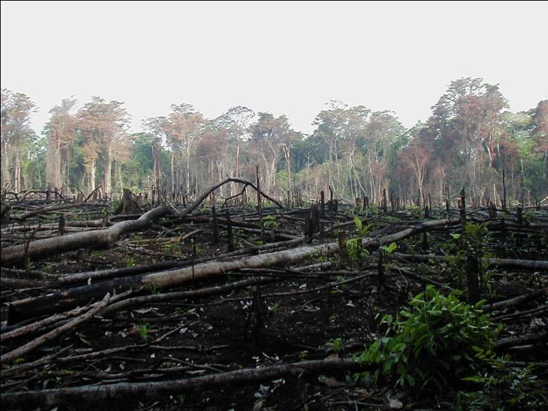 Que pensez-vous de la déforestation ?