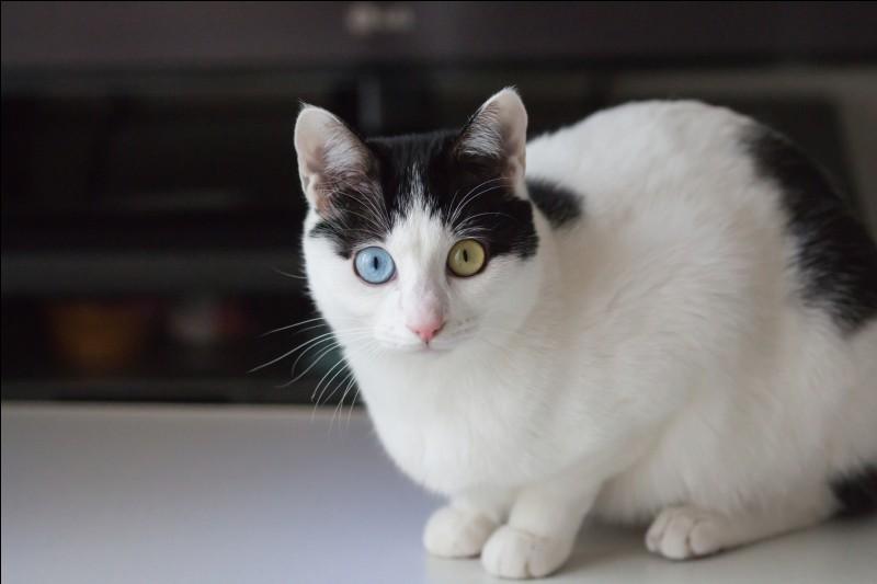 """Qui produisit le film """"The Aristo-Cat"""" ?"""
