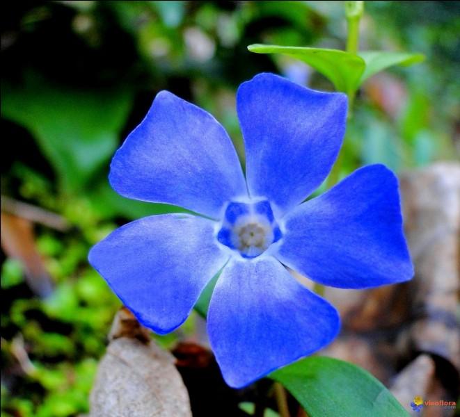 Trouvez, grâce à la fleur, le nom d'une ou un fonctionnaire !
