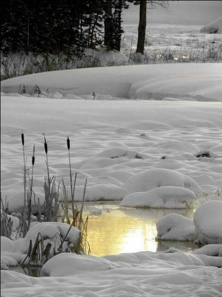 Qu'est-ce qui est sous la neige dans le titre du livre de Nicolas Vanier ?