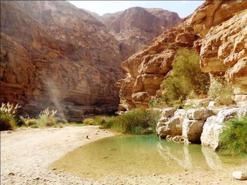 Par combien de pays Oman est-il bordé et quels sont-ils ?