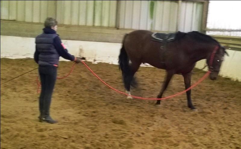Quel action discontinue faut-il faire pour mettre en place un cheval ?