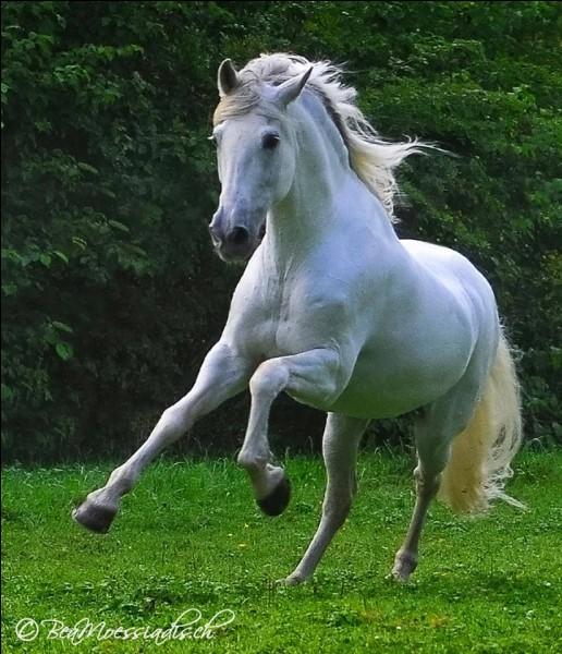 Le cheval ressent-il tes émotions ?