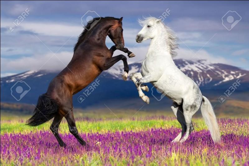 Le cheval naît-il blanc ?